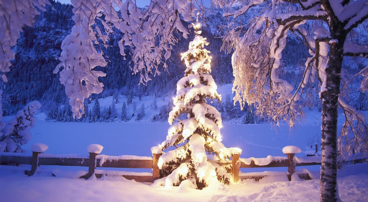 hd-wallpapers-christmas-wallpaper-tree-pictures-1920x1080-wallpaper[1]